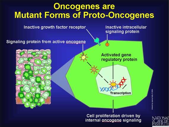 relationship between tumor suppressor genes and oncogenes associated
