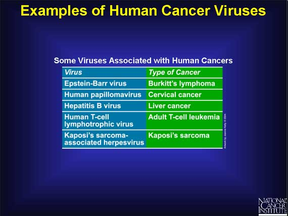 Examples of Human Cancer Viruses